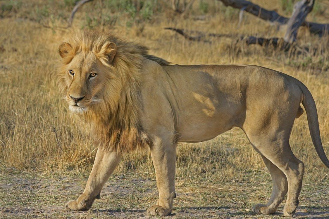 sydafrikas